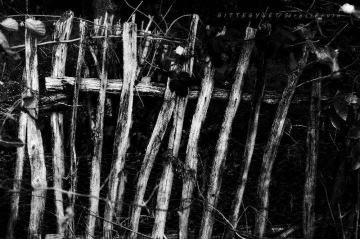 fa kerítésbw1