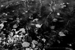Falevelek vízben