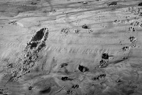 Rába, homokpad