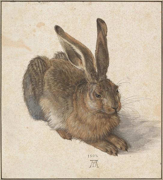 Albrecht Dürer: Mezei nyúl,1502 (fotó: Google Art Project)