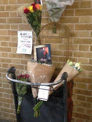 A londoni King's Cross pályaudvaron a Harry Potterr óta létezik 9 és 4-dik vágány. A rajongók ott emlékeznek Alan Rickmanre.