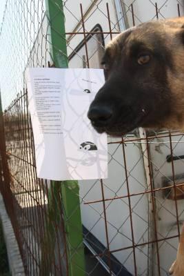 A Siófoki Állatvédő Alapítvány fényképe